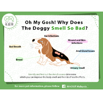 Oh My Gosh! Why Does The Doggy Smell So Bed?