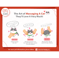 The Art of Massaging A Cat | They'll Love It Very Much!