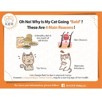 Oh No! Why Is My Cat Going 'Bald'? These Are 4 Main Reasons!