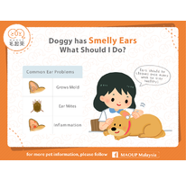 Why does my dog's ear smell so bad? What should I do?