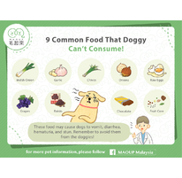 9 Common Food That Doggy Can't Consume!