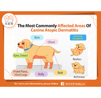 The Most Commonly Affected Areas Of Canine Atopic Dermatitis
