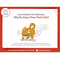 Secret Behind The Behavior | Why Do Dogs Chase Their Tails?